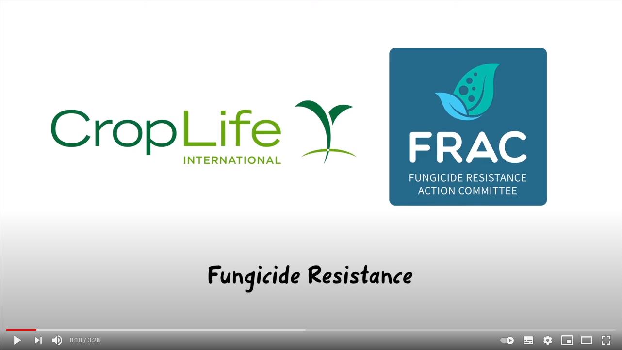 resistencia productos FRAC